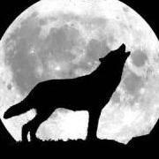 moondogge